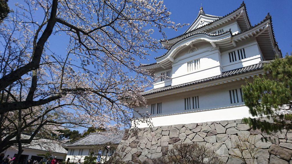 大多喜城と桜の花