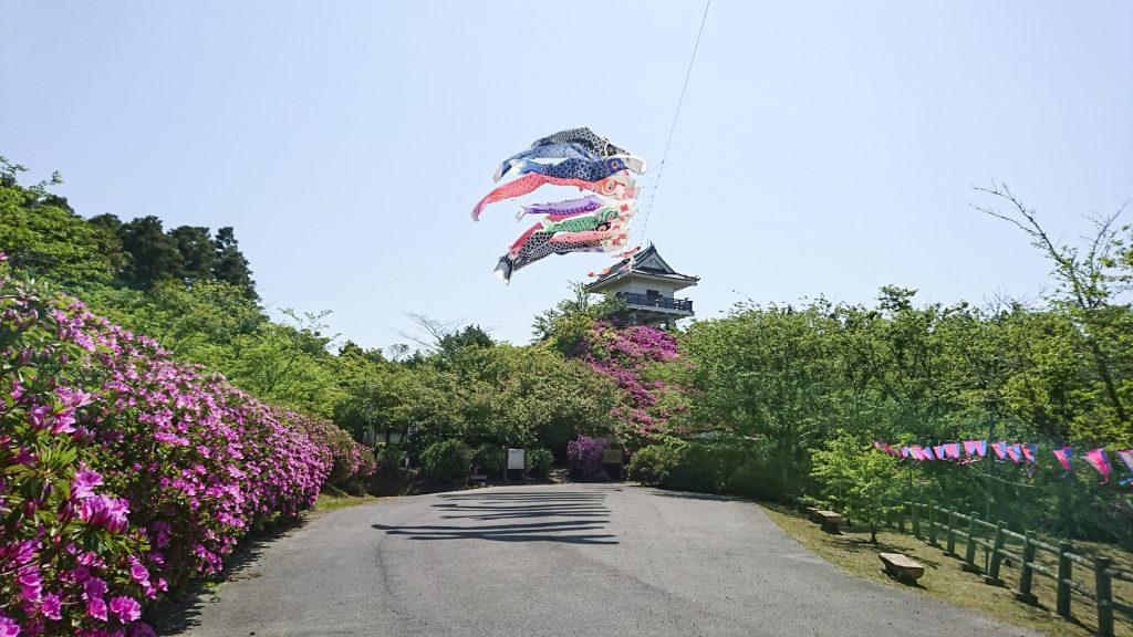 万喜城の桜と鯉のぼり