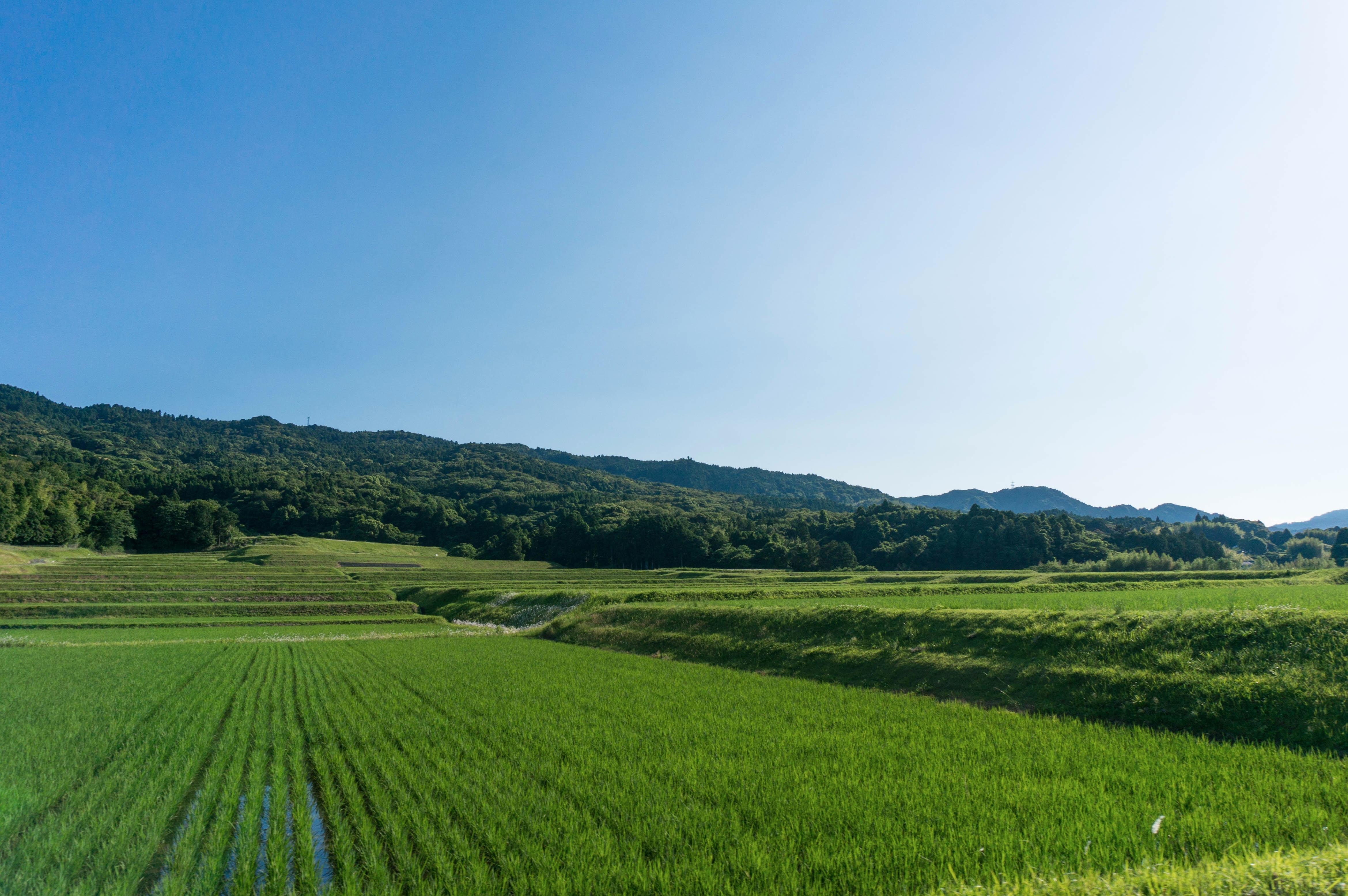 青空と棚田の田んぼと里山