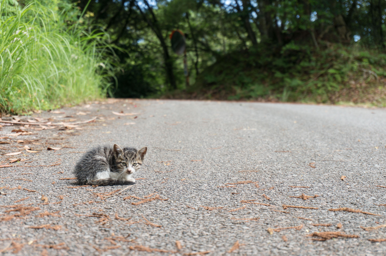 野良の子猫。道路で迷子。じっとこちらを見ている。