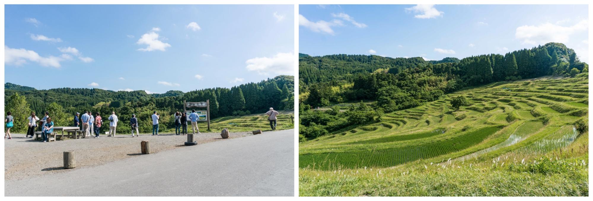 大山千枚田の風景と見物人