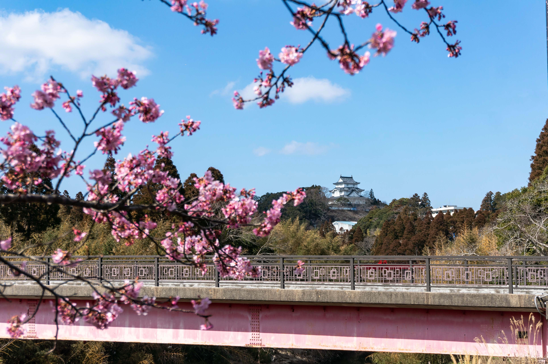 大多喜町のお城とさくら