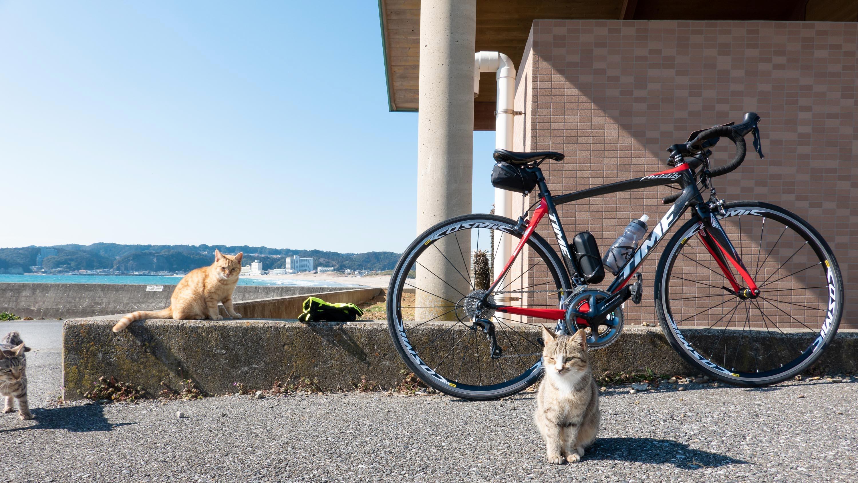 ロードバイクとねこ